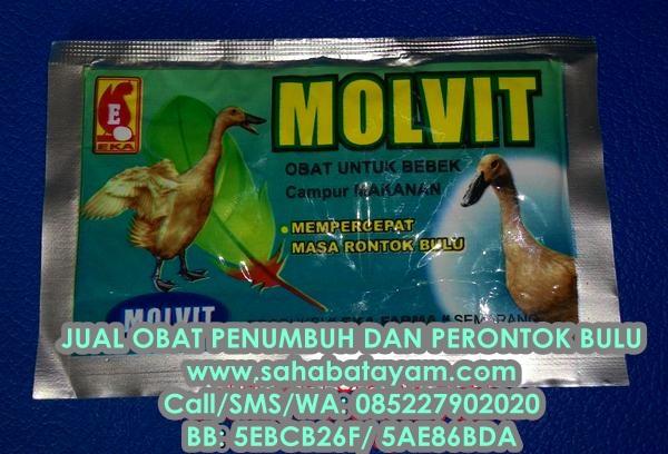Jual Obat Ayam Perontok dan Penumbuh Bulu